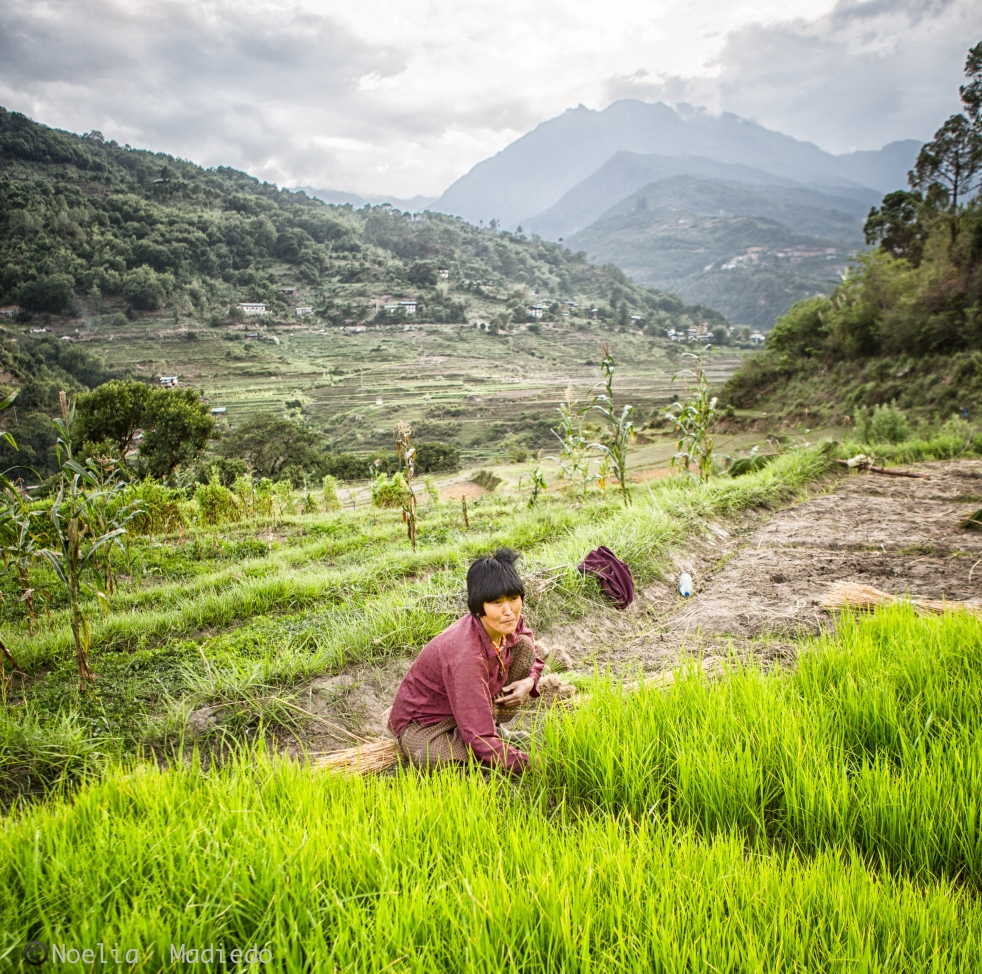 Happy woman working in the rice fields