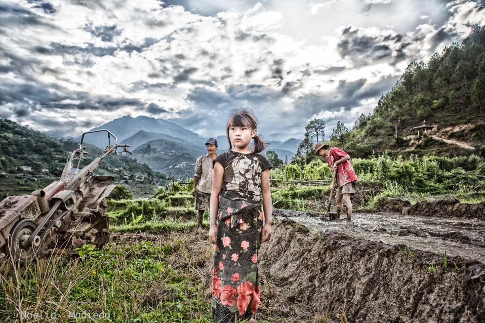 My favorite photograph of life in Punakha rice fields
