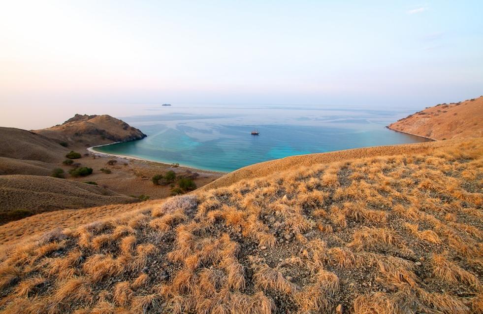 Komodo View